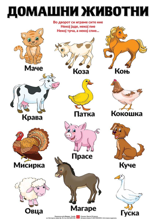 Едукативен постер - Домашни животни